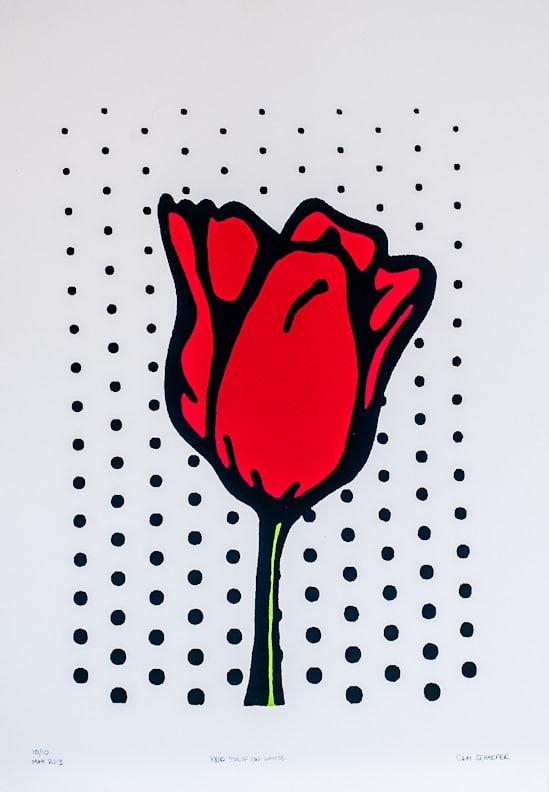 Cameron Schaefer - Red Tulip on White